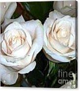 Creamy Roses I Acrylic Print