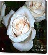 Creamy Roses IIi Acrylic Print