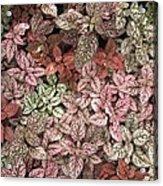 Creative Hues Of Mother Nature Acrylic Print