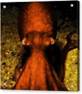 Creatures Of The Deep - The Octopus - V4 - Orange Acrylic Print