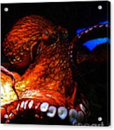 Creatures Of The Deep - The Octopus - V6 - Orange Acrylic Print