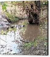 Creek Bed 1 Acrylic Print