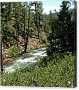 Creek Glen Alpine Creek Acrylic Print