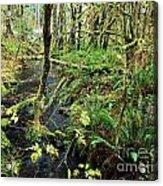Creek In The Rain Forest Acrylic Print