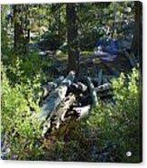 Creek In White Wolf Acrylic Print