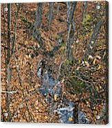 Creek  Acrylic Print