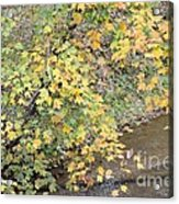 Creekside Gold 2012 Acrylic Print