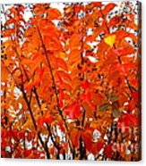 Crepe Myrtle Leaves In Autumn Acrylic Print