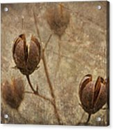 Crepe Myrtle Seed Pods With Grunge And Textures Acrylic Print