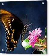 Crepe Myrtle Visitor Acrylic Print