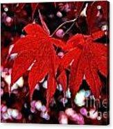 Crimson Beauty Acrylic Print