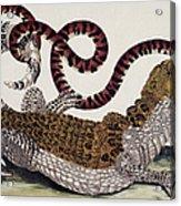 Crocodile & Snake Acrylic Print