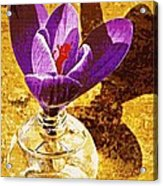 Crocus Graphic  Acrylic Print