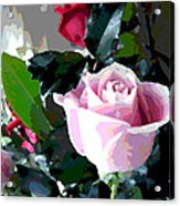 Cropped Clipped Pink Acrylic Print