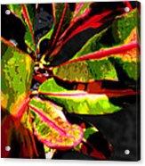 Croton Abstract I Acrylic Print