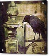 Crow On Iron Gate Acrylic Print