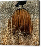Crow On Old Wooden Grave Acrylic Print