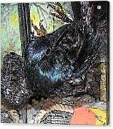 Crow Rehab Acrylic Print by YoMamaBird Rhonda