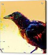 Crow Walk Acrylic Print