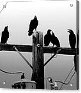 Crows And Insulators On Route 66 Acrylic Print