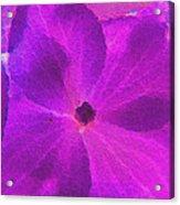 Crystelized Hydrangea Bloom Art Acrylic Print