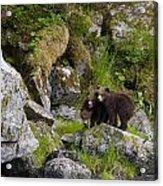 Cubs On A Rock Acrylic Print