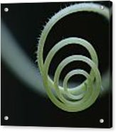 Cucumber Tendril Spiral Acrylic Print