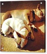 Cuddle Buddies <3 Kirby & Lola Acrylic Print by Nena Alvarez