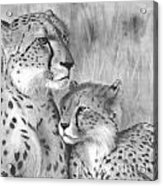 Cuddle Acrylic Print