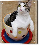 Cup O Tilly 2 Acrylic Print by Andee Design