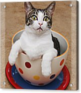 Cup O Tilly 3 Acrylic Print by Andee Design