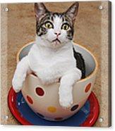 Cup O Tilly 3 Acrylic Print