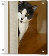 Curious Cat Acrylic Print