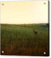 Curious Deer Acrylic Print