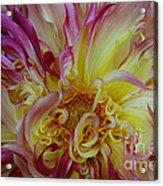 Curly Petals Acrylic Print