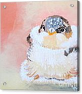 Cute Baby Birdy Acrylic Print