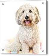 Cute Dog Portrait Acrylic Print