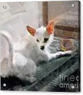 Cute Little Maggie May Acrylic Print