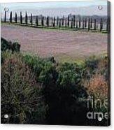 Cypress Allee Acrylic Print