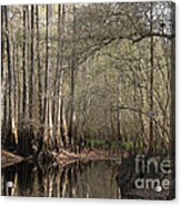 Cypress And Water Acrylic Print