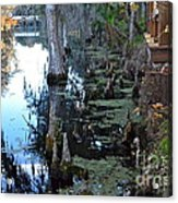 Cypress Knees And Trees Acrylic Print