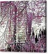Cypress People Gather Acrylic Print