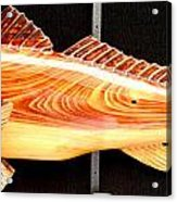 Cypress Red Fish Acrylic Print by Douglas Snider
