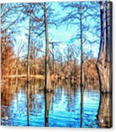 Cypress Swamp In Winter Acrylic Print