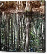 Cypress Swamp Reflections Acrylic Print