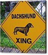 Dachshund Crossing Acrylic Print