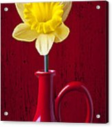 Daffodil In Red Pitcher Acrylic Print