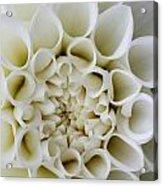 Dahlia Cloud Acrylic Print
