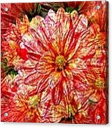 Dahlia Illusion Acrylic Print