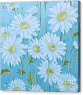 Daisies # 3 Acrylic Print